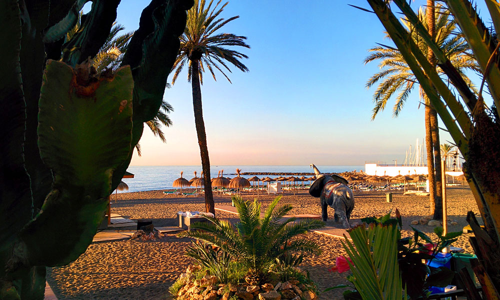 things to see and do in Marbella - See an elephant on the beach